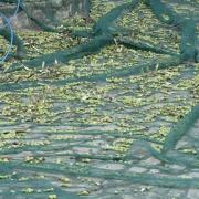 campagna-olearia-oleificio-mafrolla